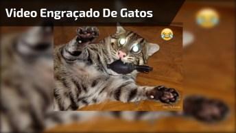 Video Engraçado De Gatos, Veja Tudo O Que Eles Aprontam Hahaha!