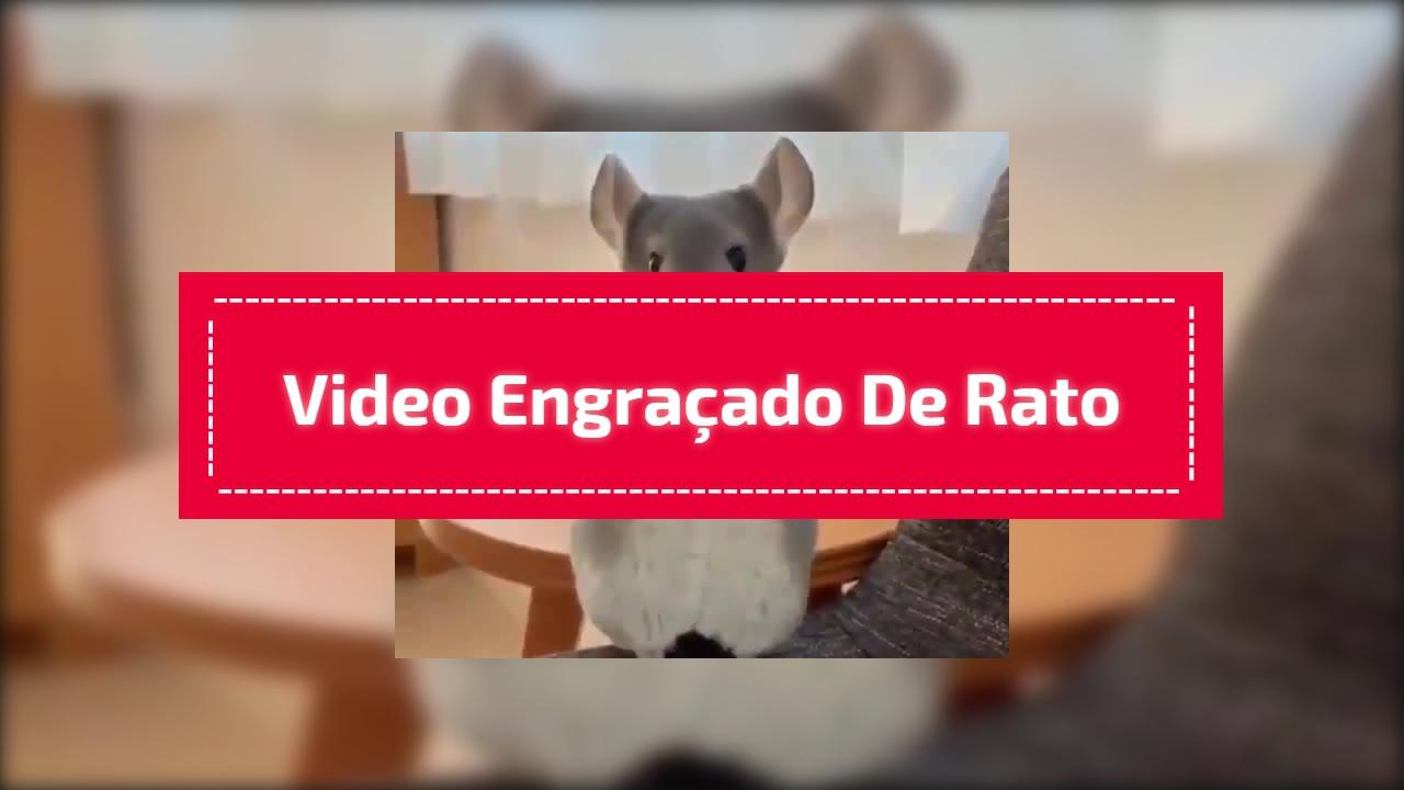Video engraçado de rato