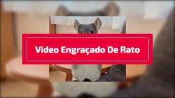 Video Engraçado De Rato, Você Vai Se Divertir Compartilhando Esse Vídeo!