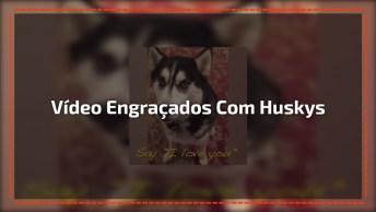 Vídeo Engraçados Com Huskys Siberianos, Como Eles São Fofos!