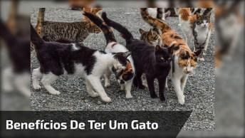 Vídeo Falando Sobre Como É Bom Ter Um Gatinho Em Casa, Confira!