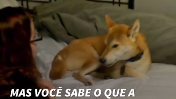 Vídeo Falando Sobre Os Benefícios De Dormir Com Seu Cãozinho!