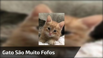Video Fofinho De Gato, Ele Vai Derreter Seu Coração Com Tanta Fofura!