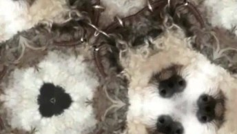 Video Fofo De Cachorro, Para Repassar No Facebook Agora Mesmo!