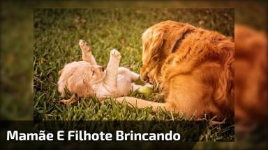 Video Fofo De Cachorros, Mamãe E Filhote Se Divertindo, Confira!