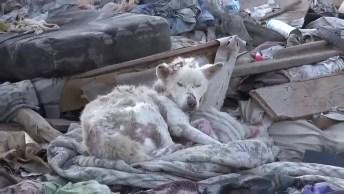 Vídeo Lindo De Transformação De Vida De Uma Cachorra De Rua, Adote Essa Ideia!