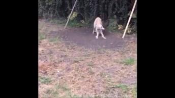 Video Mais Engraçado De Cachorros, Eles Nos Fazem Rir O Tempo Todo Hahaha!