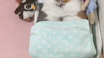 Vídeo Mais Fofinho Que Você Verá Hoje, Olha Só Estes Dois Gatinhos!