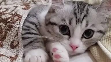 Vídeo Mais Fofinho Que Você Verá Hoje, Olha Só Que Gatinho Lindo!