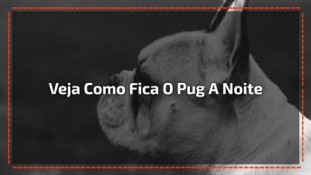 Vídeo Mostra Como Um Pug Se Comporta Durante O Sono A Noite Toda!