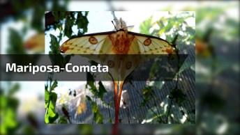 Vídeo Mostrando A Mariposa-Cometa Raríssima Nativa Da Ilha De Madagascar!