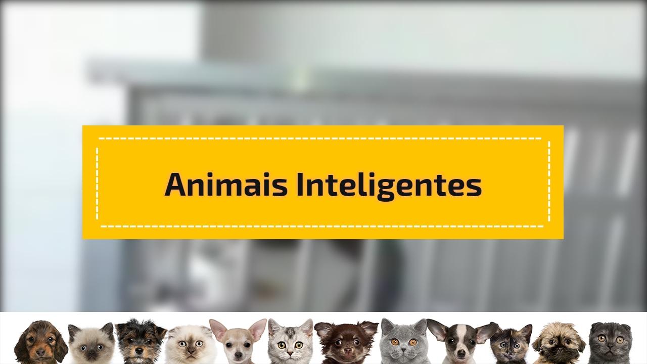 Vídeo mostrando animais inteligentes, olha só como eles nos surpreendem!!!