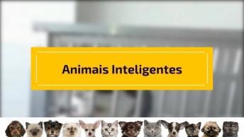Vídeo Mostrando Animais Inteligentes, Olha Só Como Eles Nos Surpreendem!