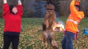 Vídeo Mostrando Como É Divertido Ter Um Cachorro Da Raça Pastor Alemão!