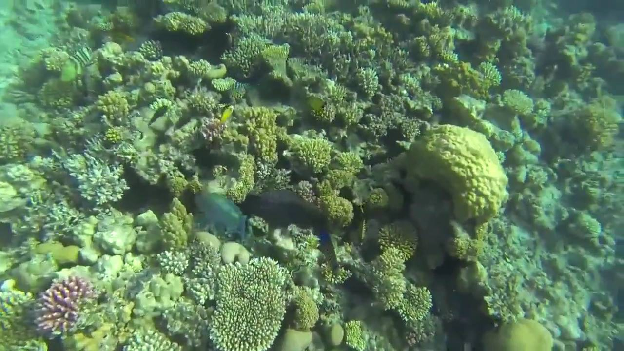 Vídeo mostrando como é lindo o fundo do mar