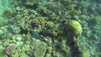 Vídeo Mostrando Como É Lindo O Fundo Do Mar, Vale A Pena Conferir!
