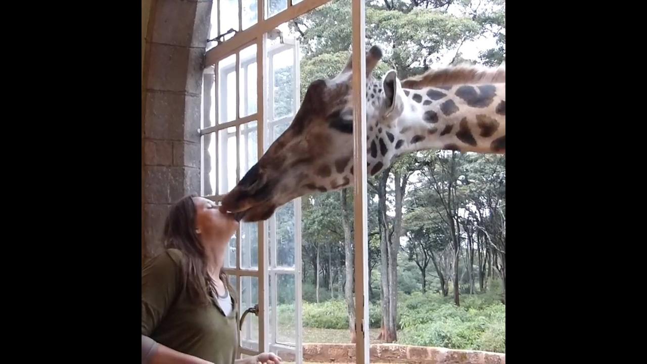 Vídeo mostrando como funciona o hotel Giraffe Manor