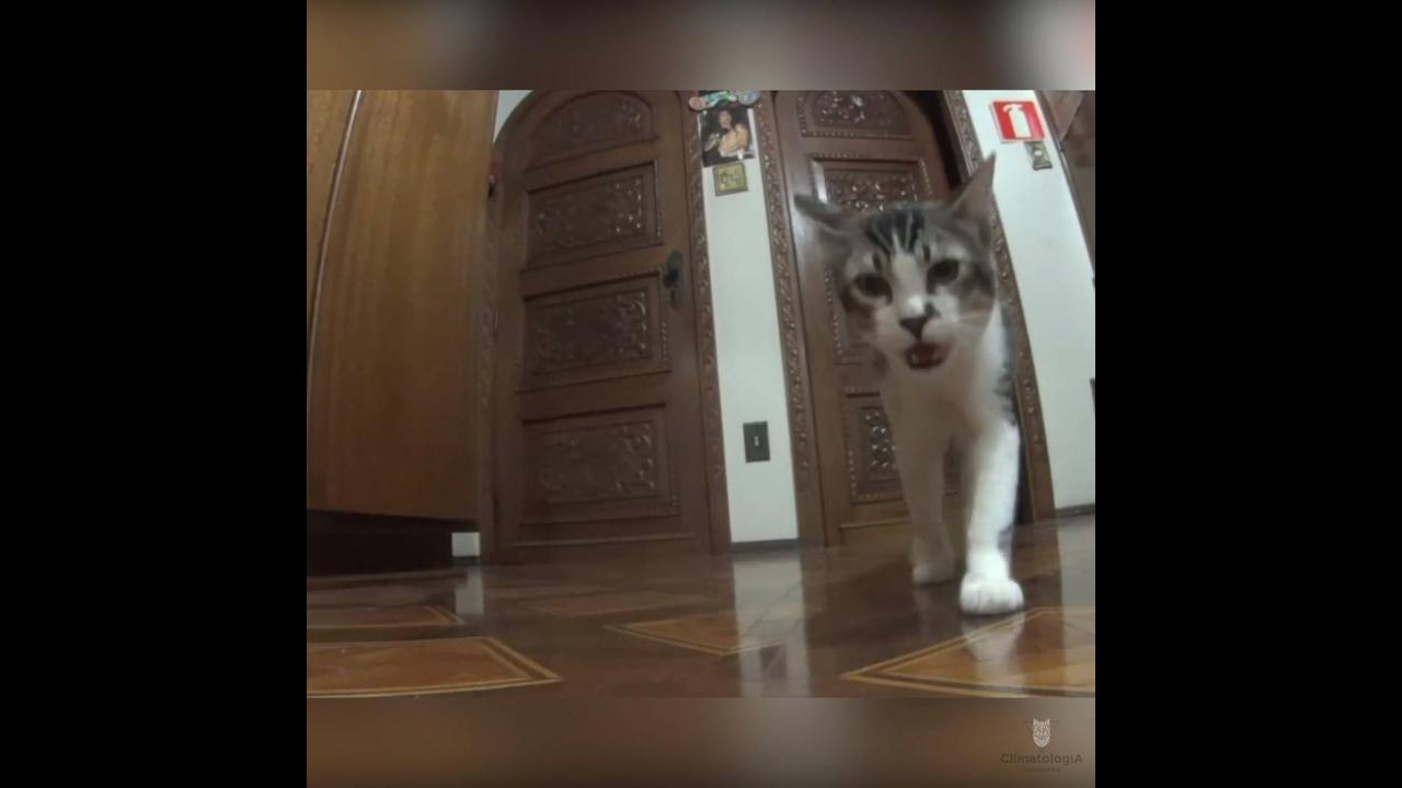 Vídeo mostrando como os gatos são amorosos