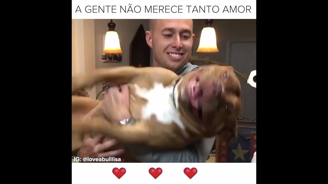 Vídeo mostrando o amor dos cães para com os humanos