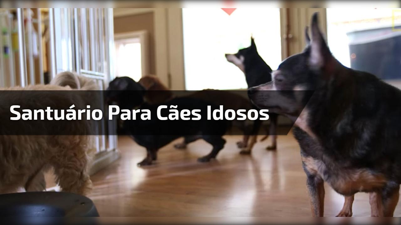 Vídeo mostrando o dia a dia de um santuário para cães idosos!!!