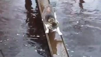 Vídeo Mostrando Os Gatinhos De Cada Signo, É Um Mais Fofo Que P Outro!
