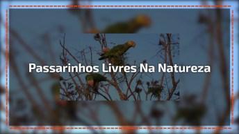 Vídeo Mostrando Passarinhos Livres Na Natureza, Pois É Assim Que Tem Que Ser!