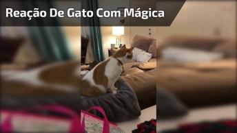 Vídeo Mostrando Reação De Gato Com Mágica Do Desaparecimento De Seu Dono!