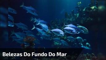 Vídeo Mostrando Um Pedacinho Do Fundo Do Mar, Olha Só Que Lindo!