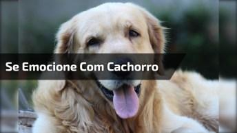 Video Motivacional Com Cachorro, A Mensagem É Muito Linda!