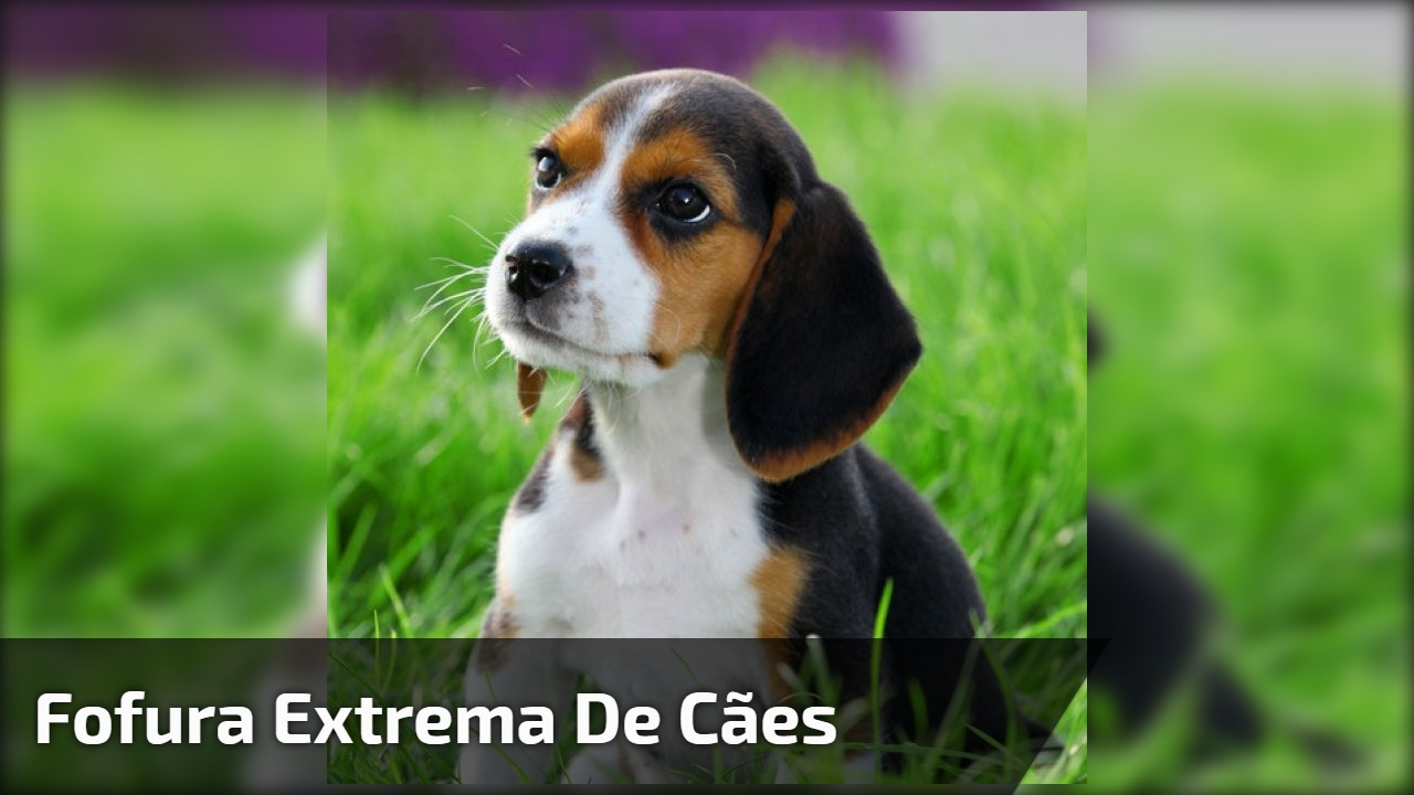 Fofura extrema de cães