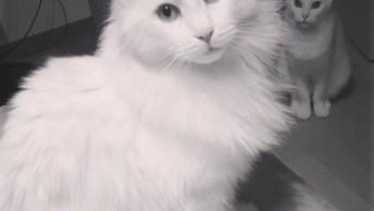 Vídeo Para Quem Ama Gatos, Veja Que Coisa Mais Linda Este Amiguinho!