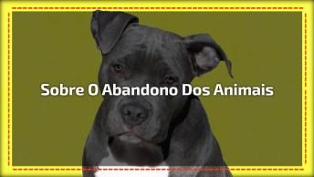 Vídeo Para Refletir Sobre O Abandono Dos Animais, Um Fato Triste E Muito Comum!