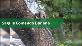 Vídeo Pra Começar Bem O Dia, Veja Estes Saguis Pegando Banana Com Mulher!