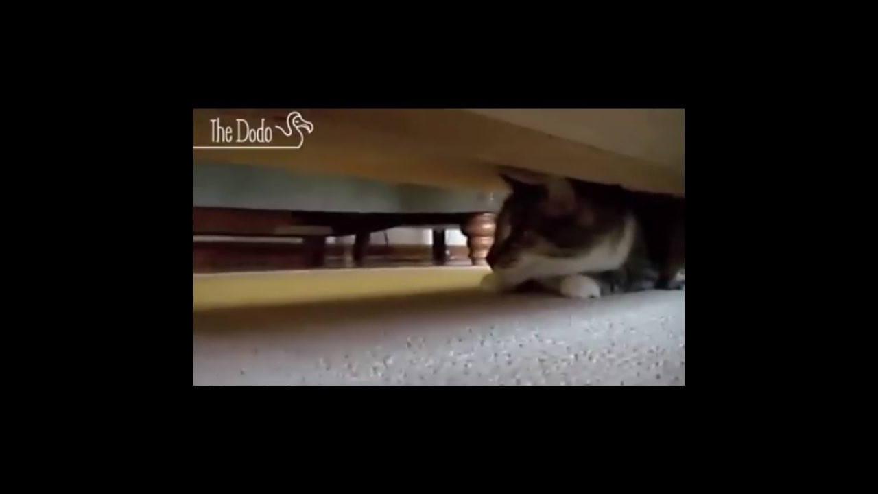 Video prova que os gatos são espiões secretos