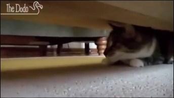 Video Prova Que Os Gatos São Espiões Secretos, Ainda Vai Duvidar?