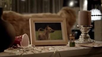 Video Que Mostra Uma Festa Canina Na Ausência Dos Humanos Hahaha!