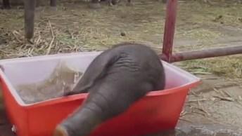 Vídeo Super Fofo De Animais Que Adoram Um Banho, Olha Só Que Lindos!
