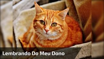 Video Triste Do Gato Que Fica Esfregando Em Celular, Veja Que Fofo!