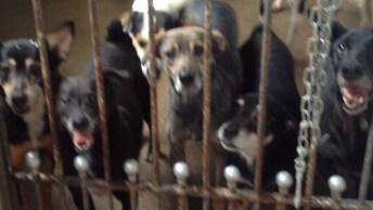 Visita A Instituição Que Ajuda Cães Abandonado, Olha Só A Carinha Deles!