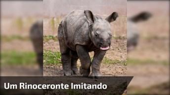 Você Já Viu Um Rinoceronte Imitando Um Carneiro? Então Veja O Vídeo!