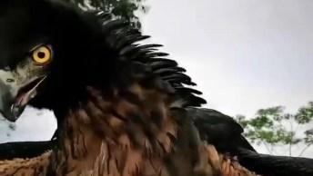 Você Já Viu Uma Águia De Perto? Que Animal Mais Misterioso E Lindo!