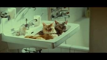 Você Sabe O Que O Seu Gato Faz Quando Sai De Casa? Não? Então Da Só Uma Olhada!