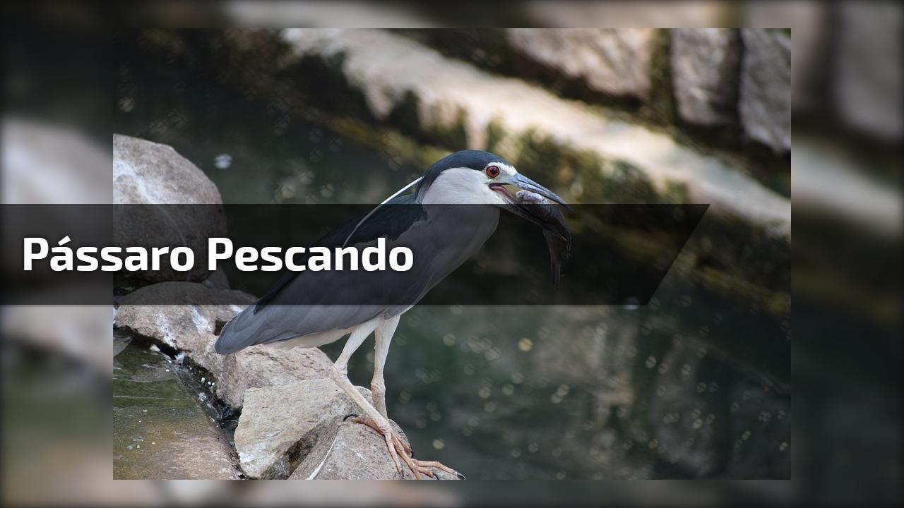 Pássaro pescando