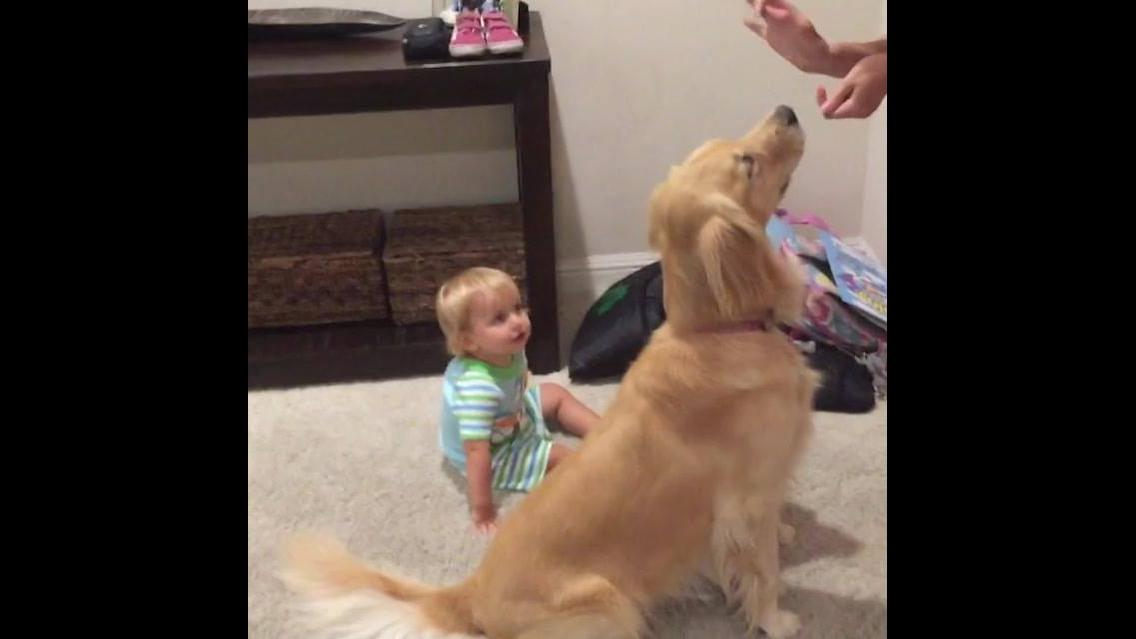As cenas mais fofas de bebês e seus cachorros de estimação