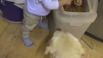 Bebê Alimentando Os Cães, Um Vídeo Muito Fofo Para Compartilhar!