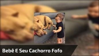 Bebê Beija Cachorro E Cachorro Retribui, Confira Que Imagem Mais Fofinha!
