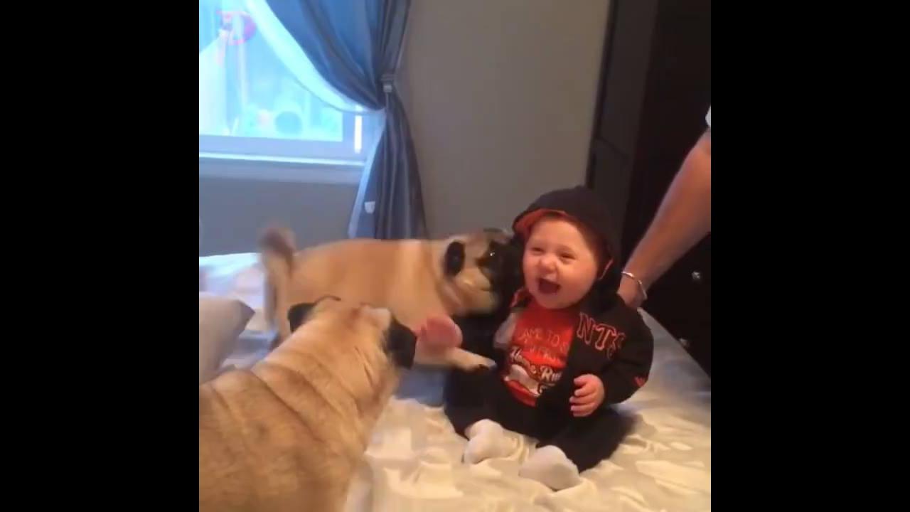 Bebê brincando com cachorros, é muita fofura para um video só!