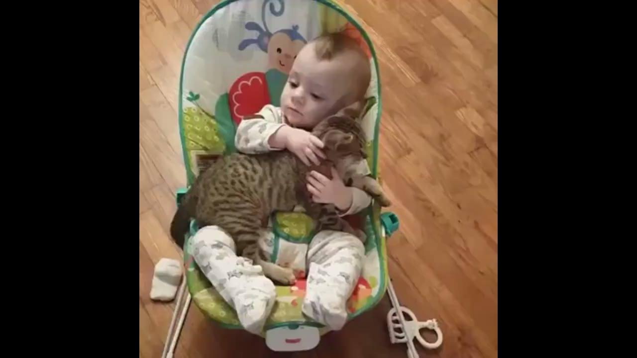Bebê com gato em momento fofo