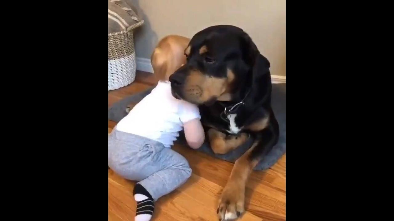 Bebê dando carinho a um cachorro enorme