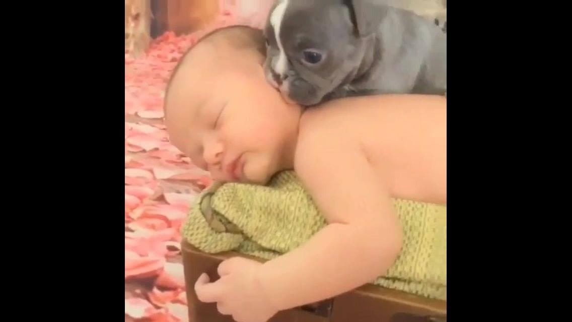 Bebê dormindo com três filhotes de cachorros super fofos
